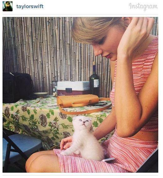 Тэйлор Свифт завела котёнка