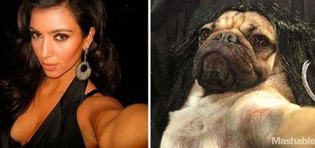 Собака повторила серию селфи Ким Кардашян