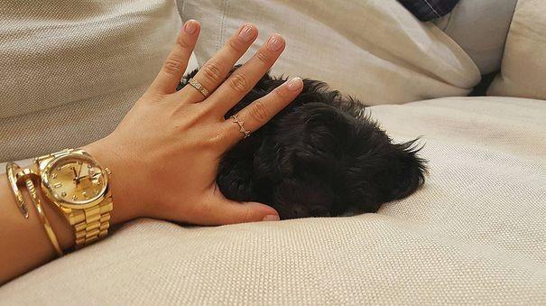 Деми Ловато получила в подарок нового щенка