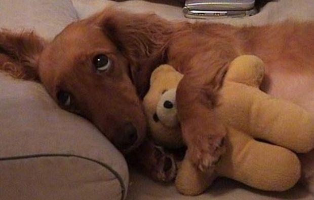 Как покупать собаке игрушку