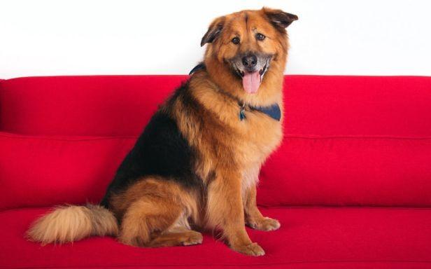 Какие пород собак самые кусачие?