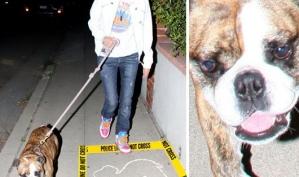 Бульдог Саманты Ронсон загрыз соседскую собаку