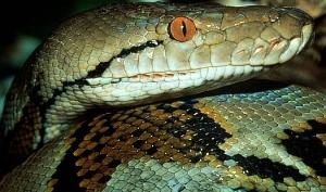 Змеиный принт в украшениях и аксессуарах