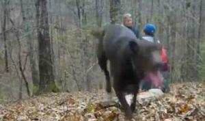 Ролик с собакой, помешавшей сделать предложение, стал хитом ютьюба