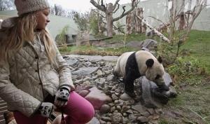Лица Года по версии BBC: от королевских особ до панды
