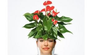 Цветы - хранители домашнего уюта