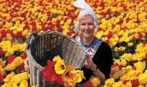 Долгий цветочный путь: Эквадор - Нидерланды - Россия – Новосибирск