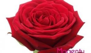 Значение цвета и количества роз в букете