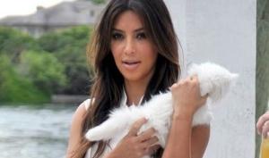 Ким Кардашян завела котёнка