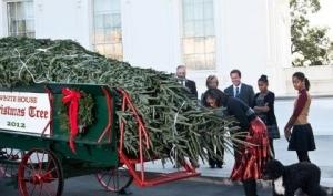 В Белый дом прибыла ёлка