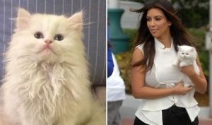 Котёнок Ким Кардашян умер
