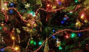 Лучшая ёлка на Новый Год – настоящая!