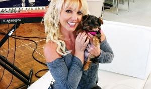 Бритни Спирс будет судиться из-за собаки