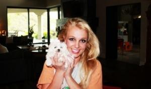 Бритни Спирс завела новую собаку
