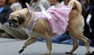 Одежда для собак люкс класса
