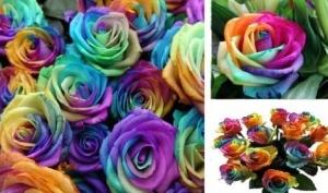 Как сделать разноцветные розы