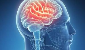 Ученые нашли в мозгу зоны совести, воспоминаний и научились читать мысли