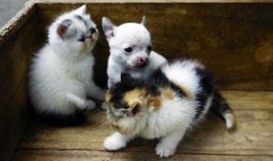Кошка родила щенка?