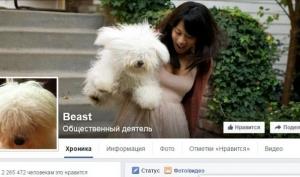 Самые знаменитые собаки Интернета