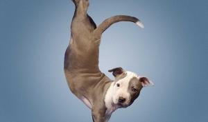 Собаки в позе лотоса? Нет ничего невозможного для человека с фотошопом