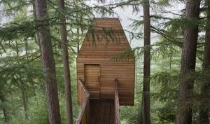 Деревянные дома становятся популярными