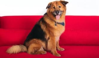 Какие породы собак самые кусачие?