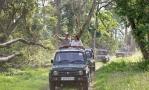 Принц Уильям и Кейт Миддлтон посетилиНациональный парк Казиранга
