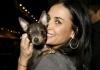 Деми Мур отправила свою собачку на иглоукалывание
