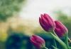 Интересное про цветы